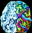 brain no bg 2455565677345656